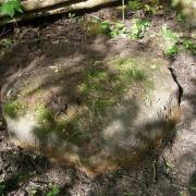 Šauklių senovės kulto vietos akmuo